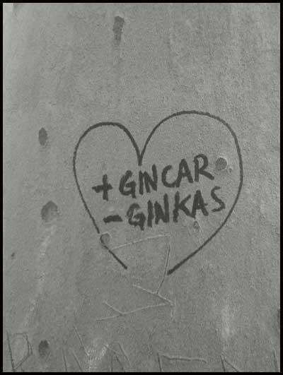 + Gincar - Ginkas